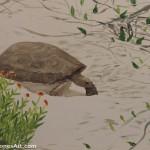 Blanketflower Tortoise Painting