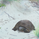 Gopher Tortoise on Trail Painting