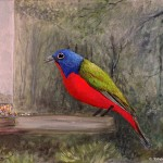"""Painted Bunting acrylic on canvas 16 x 12 x 0.5"""" released: 12/27/2016 price: $300"""