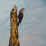 Pileated Woodpecker acrylic on canvas [not available] Given to a collector in Crescent City.